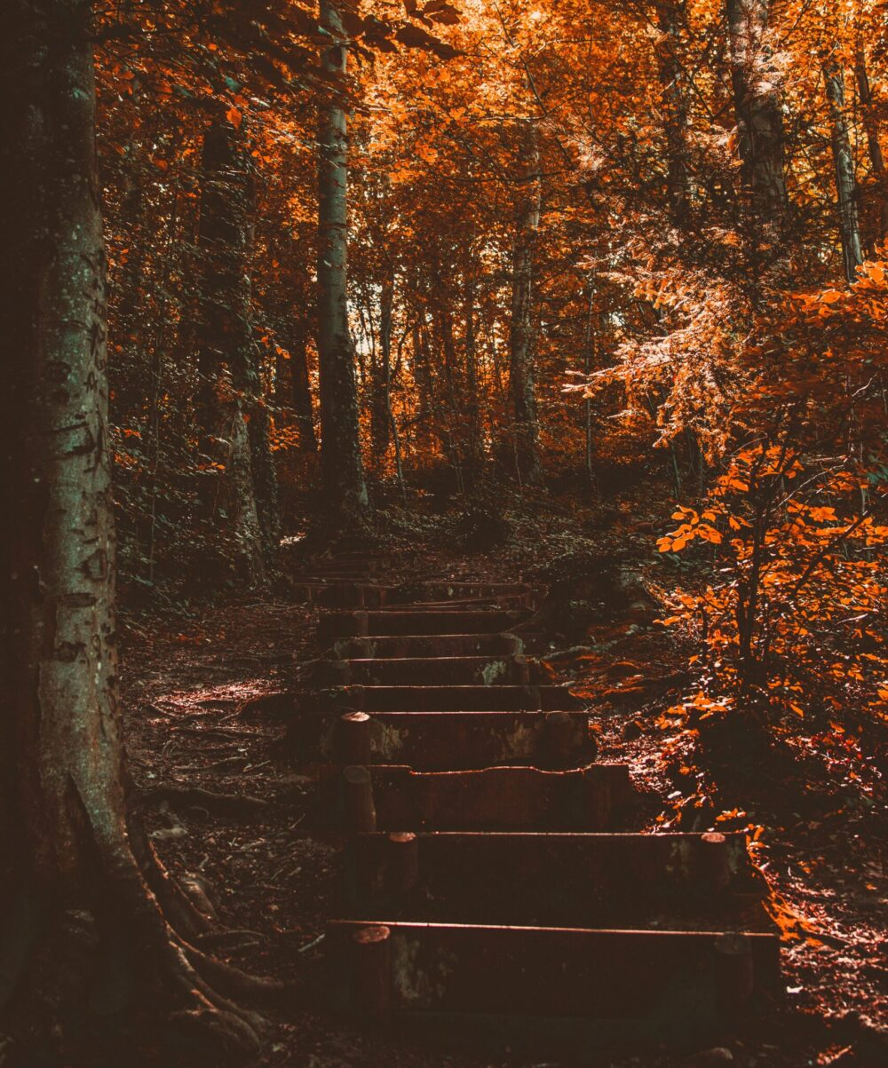 Fall in love with fall: how to enjoy autumn's darker days